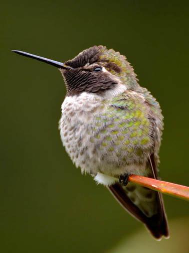 BradonDowling-Bird3-LG